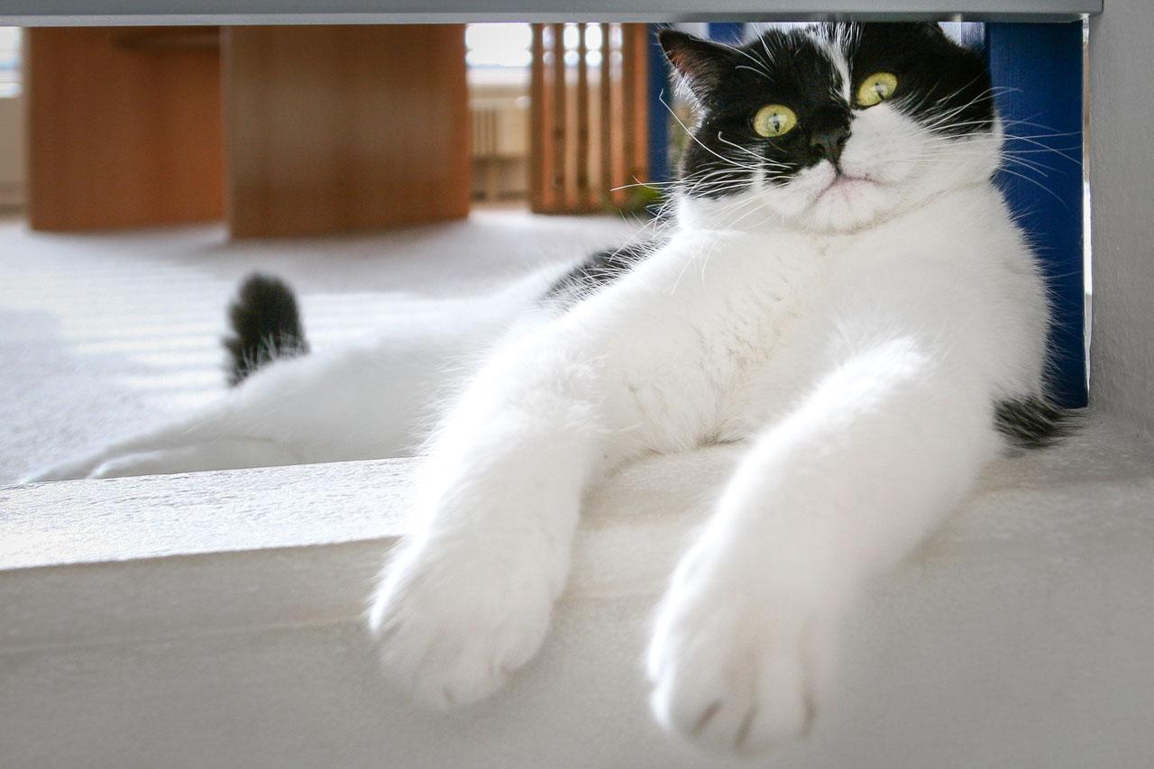 portfolio - Animals-Bild-3789-1280WEB.jpg