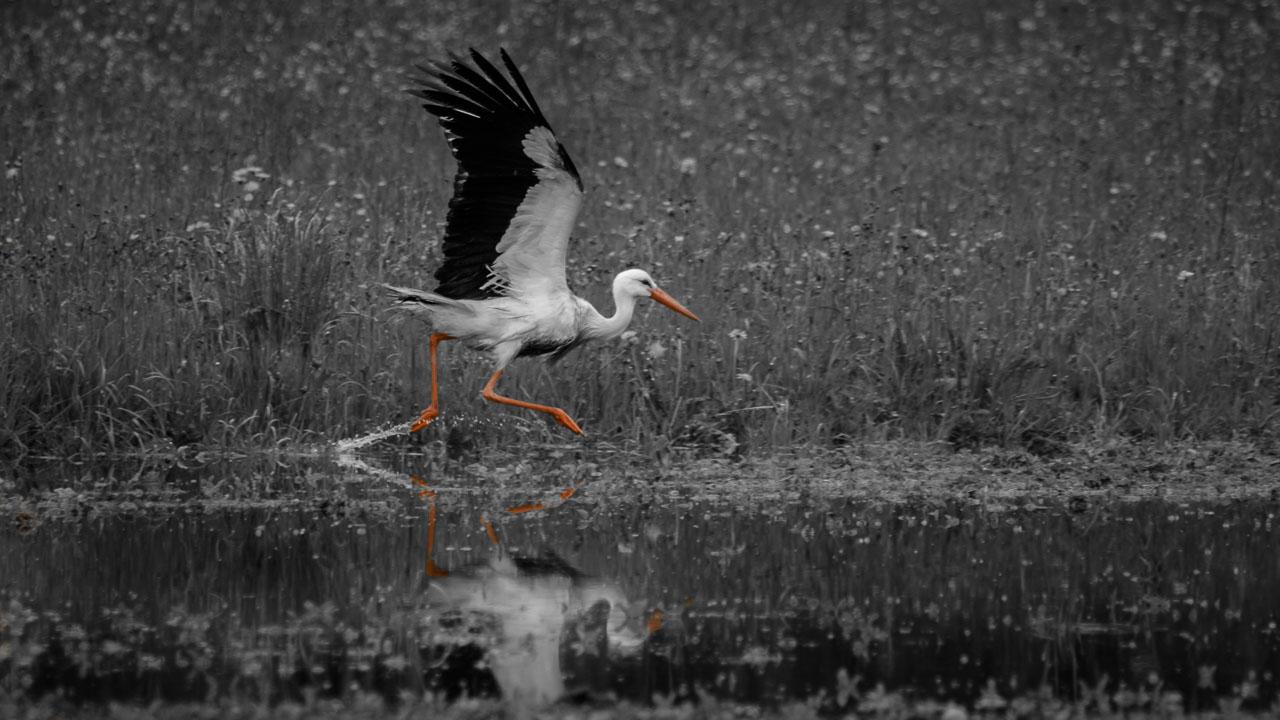 portfolio - Animals-IMGL0442-1280WEB.jpg