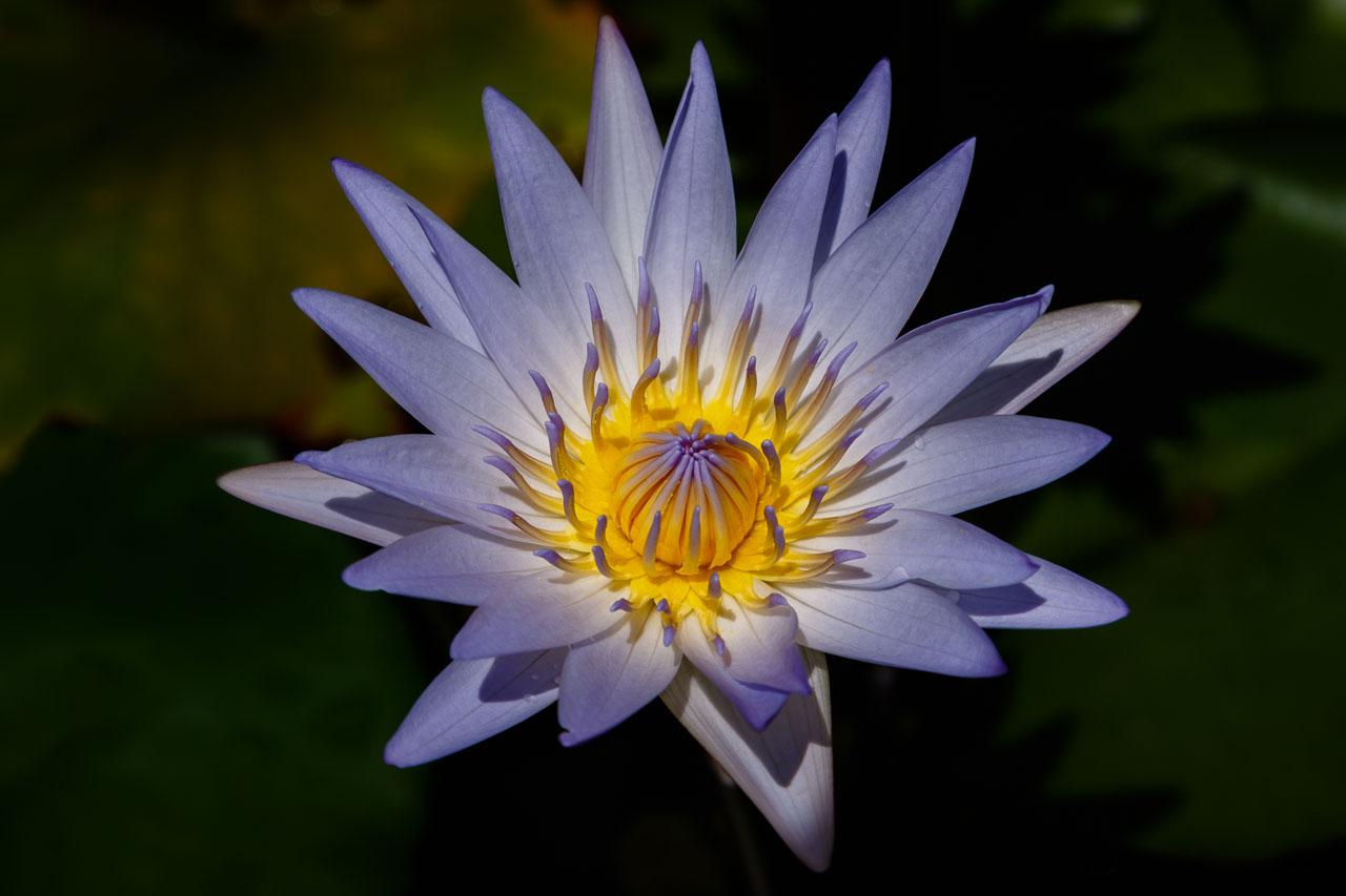 portfolio - Nature-IMGL6201-1280WEB.jpg